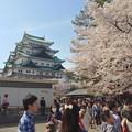 写真: 名古屋城春まつり - 057