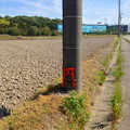 写真: ゴミのポイ捨て防止用と思われるミニ鳥居が電信柱に! - 1