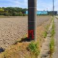 Photos: ゴミのポイ捨て防止用と思われるミニ鳥居が電信柱に! - 1