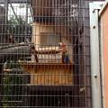 東山動植物園バードホール:アカコンゴウインコ - 1