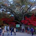 写真: 東山植物園 紅葉ライトアップ 2013 No - 015:点灯前の紅葉