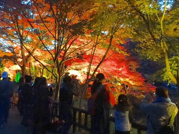 東山植物園 紅葉ライトアップ 2013 No - 019