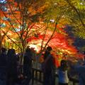 写真: 東山植物園 紅葉ライトアップ 2013 No - 019