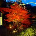 写真: 東山植物園 紅葉ライトアップ 2013 No - 022