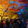 写真: 東山植物園 紅葉ライトアップ 2013 No - 023
