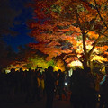 写真: 東山植物園 紅葉ライトアップ 2013 No - 059