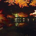 写真: 東山植物園 紅葉ライトアップ 2013 No - 061