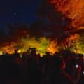 写真: 東山植物園 紅葉ライトアップ 2013 No - 062