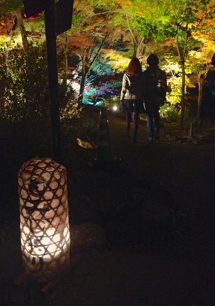 東山植物園 紅葉ライトアップ 2013 No - 063