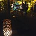 写真: 東山植物園 紅葉ライトアップ 2013 No - 063
