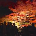 写真: 東山植物園 紅葉ライトアップ 2013 No - 067