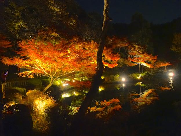 写真: 東山植物園 紅葉ライトアップ 2013 No - 072