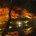 写真: 東山植物園 紅葉ライトアップ 2013 No - 073