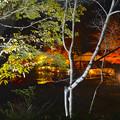 写真: 東山植物園 紅葉ライトアップ 2013 No - 092