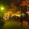 写真: 東山植物園 紅葉ライトアップ 2013 No - 097