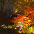 写真: 東山植物園 紅葉ライトアップ 2013 No - 108:東山スカイタワー