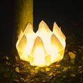 写真: 東山植物園 紅葉ライトアップ 2013 No - 111:花のイルミネーション