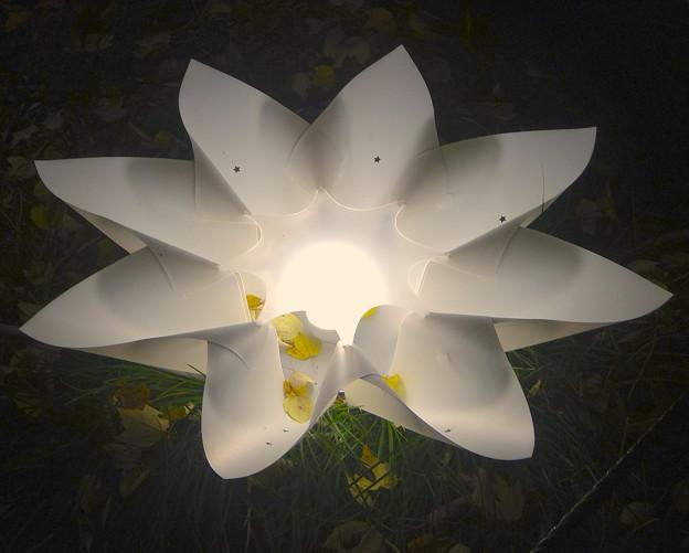 写真: 東山植物園 紅葉ライトアップ 2013 No - 113:花のイルミネーション