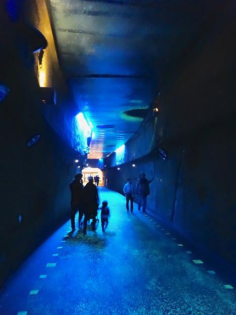 写真: 東山植物園 紅葉ライトアップ 2013 No - 121:星が丘門まで通じるトンネル