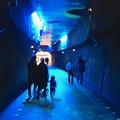写真: 東山植物園 紅葉ライトアップ 2013 No - 122:星が丘門まで通じるトンネル