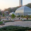 写真: 東山動植物園 No - 129:温室前のフラワーステージ