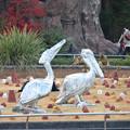 写真: 東山動植物園 No - 131:フラワーステージのペリカン像