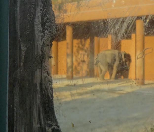 新アジアゾウ舎「ゾージアム」No - 091:スリットビューからの眺め