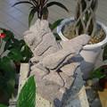 写真: 植物会館:緑の中の彫刻展 - 09(石でできたバッタ)