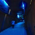 写真: 東山動植物園 星が丘門の畜光ライトアップ No - 2