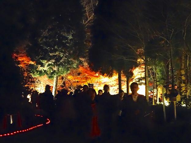 東山植物園 紅葉ライトアップ 2013 最終日 No - 03