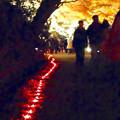 写真: 東山植物園 紅葉ライトアップ 2013 最終日 No - 25