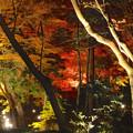 写真: 東山植物園 紅葉ライトアップ 2013 最終日 No - 27
