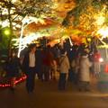 写真: 東山植物園 紅葉ライトアップ 2013 最終日 No - 29