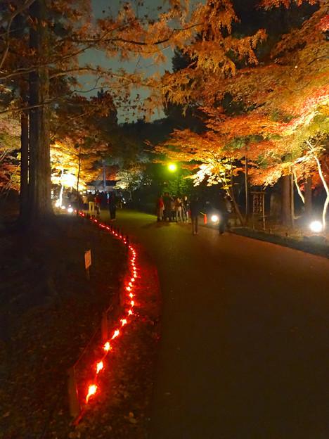 写真: 東山植物園 紅葉ライトアップ 2013 最終日 No - 32