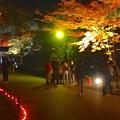 写真: 東山植物園 紅葉ライトアップ 2013 最終日 No - 33
