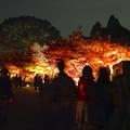 写真: 東山植物園 紅葉ライトアップ 2013 最終日 No - 36