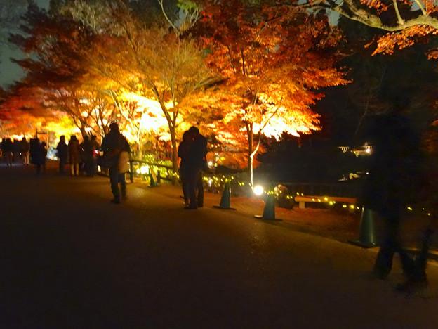 東山植物園 紅葉ライトアップ 2013 最終日 No - 44