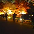 写真: 東山植物園 紅葉ライトアップ 2013 最終日 No - 44