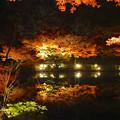 写真: 東山植物園 紅葉ライトアップ 2013 最終日 No - 47