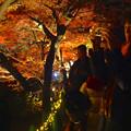 写真: 東山植物園 紅葉ライトアップ 2013 最終日 No - 46