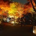 写真: 東山植物園 紅葉ライトアップ 2013 最終日 No - 49