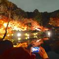 写真: 東山植物園 紅葉ライトアップ 2013 最終日 No - 50