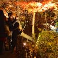 写真: 東山植物園 紅葉ライトアップ 2013 最終日 No - 54