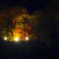 写真: 東山スカイタワーから見た夜景 No - 43:紅葉ライトアップ中の東山植物園