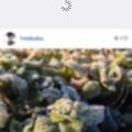 "Photos: Instagram 5.0:ホーム画面は""引っ張って更新""に!"