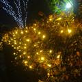 写真: ガーデンふ頭臨港緑園のクリスマスイルミネーション 2013 No - 3