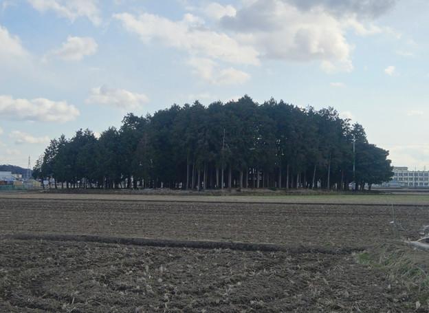 田んぼの中にポツンと浮かぶ、青塚前神明社 - 1