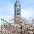 写真: 桜越しに見た東山スカイタワー - 1