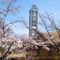 写真: 桜越しに見た東山スカイタワー - 2