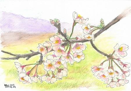 20130404安来広瀬の桜